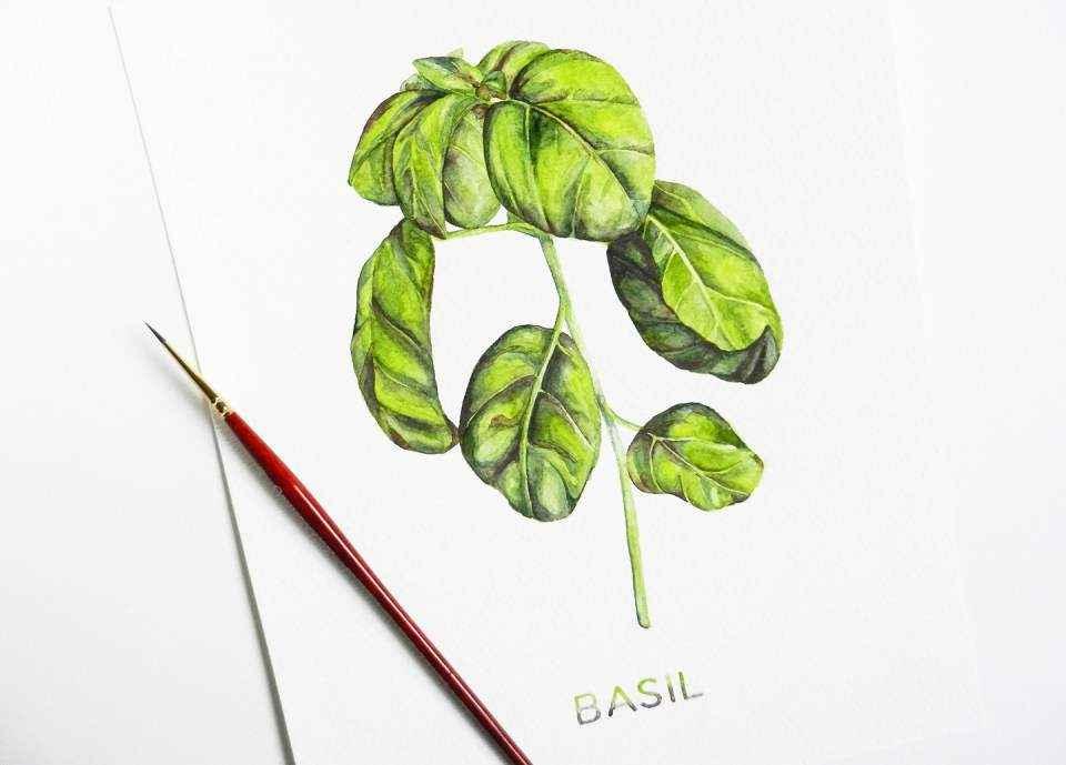 Рисуем растения акварелью с помощью светового стола